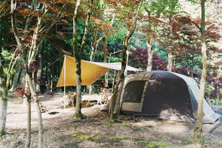 林間キャンプの写真・画像素材[4447916]