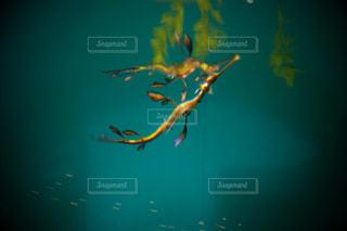 水の上を飛ぶ鳥の写真・画像素材[2386175]