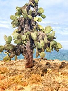 サボテンの下のイグアナの写真・画像素材[2385506]