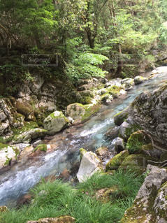 木々を背景にした岩の川の写真・画像素材[2380484]