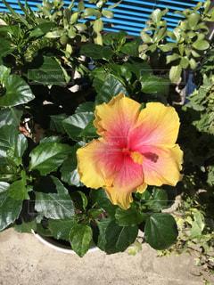 花のクローズアップの写真・画像素材[2376789]
