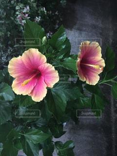 夏の花の写真・画像素材[2389490]