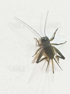 白い表面の昆虫の写真・画像素材[2438306]