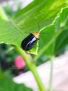 葉っぱの上の小さな昆虫の写真・画像素材[2438309]