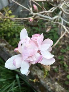 植物の上のピンクの花の写真・画像素材[3058306]