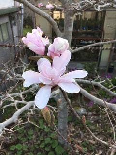 植物の上のピンクの花の写真・画像素材[3058309]