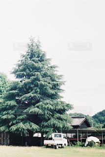 大きな木の写真・画像素材[2377986]
