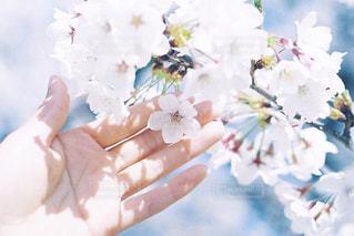 待ち遠しい春の写真・画像素材[2485717]