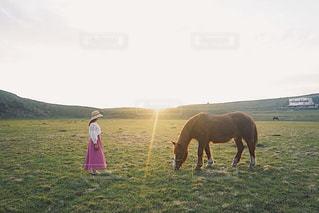 夕方の草千里の写真・画像素材[2485721]