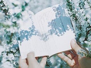 雪柳の写真・画像素材[3771221]