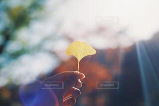 秋の訪れの写真・画像素材[3791054]