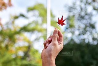 小さい秋見つけたの写真・画像素材[2386354]