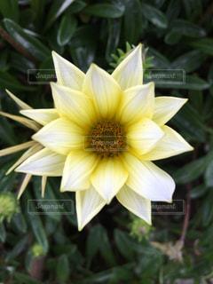 生きた花の写真・画像素材[2378408]