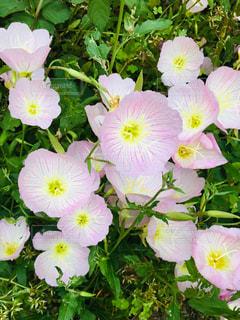 花のクローズアップの写真・画像素材[2435401]