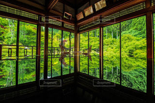 佐賀 環境芸術の森 新緑の写真・画像素材[2378435]
