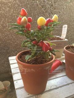 No.92933 植物