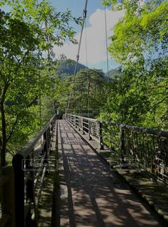 緑豊かな吊り橋の写真・画像素材[2389025]