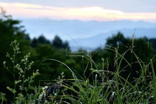 夜明けの景色と草に付いた朝露の写真・画像素材[2406277]