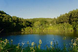 池の周りに朝日が当たっている風景の写真・画像素材[2406279]