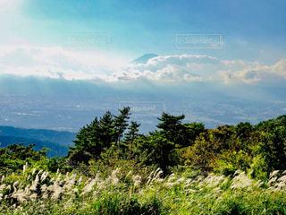 雲が掛かった山と風になびくススキの写真・画像素材[2428637]