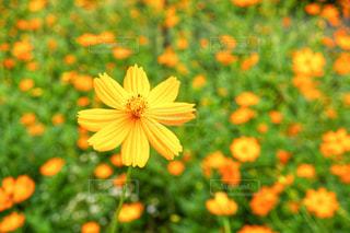 花のクローズアップの写真・画像素材[2444253]