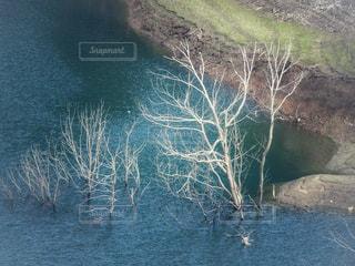 水面から突き出た枯れ木の写真・画像素材[2462737]