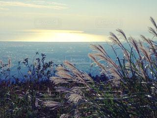 秋の海とススキの写真・画像素材[2489062]