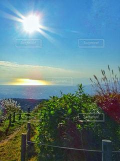 秋の草花と夕日の写真・画像素材[2489900]