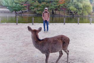 鹿と目が合いすくむ男の子の写真・画像素材[3967026]