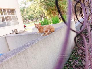 見返り美人なトラ猫さんの写真・画像素材[2379921]
