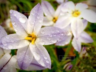 花のクローズアップの写真・画像素材[2380946]