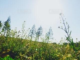 茂みと木の群れの写真・画像素材[2731230]