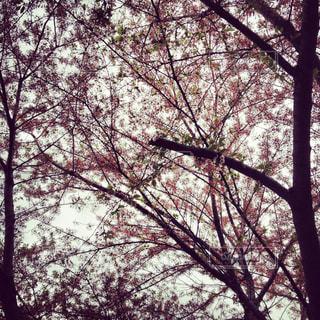 森の木の写真・画像素材[2392578]