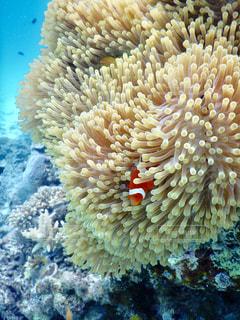 サンゴの水中眺めの写真・画像素材[2382721]