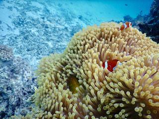サンゴのクローズアップの写真・画像素材[2382722]