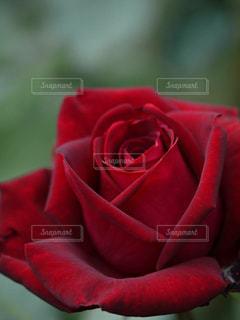 花の写真・画像素材[129600]
