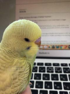 オウムの上に座っている鳥の写真・画像素材[2387834]