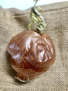 玉葱芽の写真・画像素材[2399069]