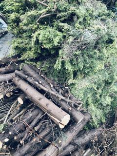 木の写真・画像素材[2487545]