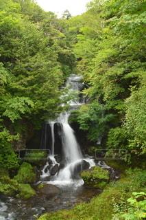夏の滝の写真・画像素材[2446129]
