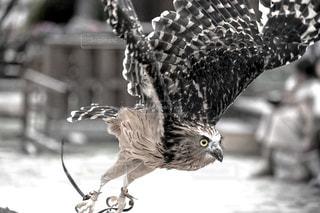 鳥のクローズアップの写真・画像素材[2387722]