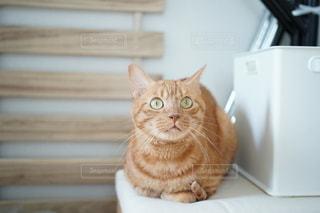 猫と暮らす。の写真・画像素材[2691515]