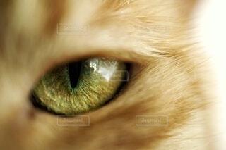 猫の瞳の写真・画像素材[3739427]
