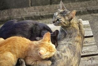 子育て世帯(猫)の写真・画像素材[3764599]