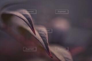 葉っぱのクローズアップ。の写真・画像素材[4069634]