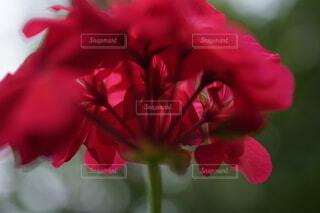 花のクローズアップの写真・画像素材[4401950]