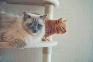 カメラ目線の猫の写真・画像素材[4766366]