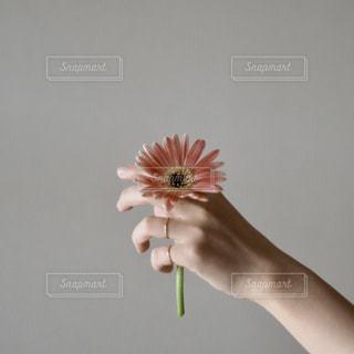花を持つ手の写真・画像素材[2389828]