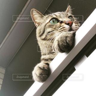 ベランダから外を伺う猫の写真・画像素材[2389579]