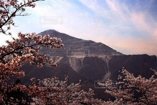 自然の写真・画像素材[117375]